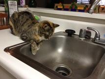 Delilah guarding the sink