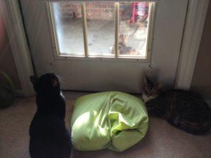Bird Watching Cats