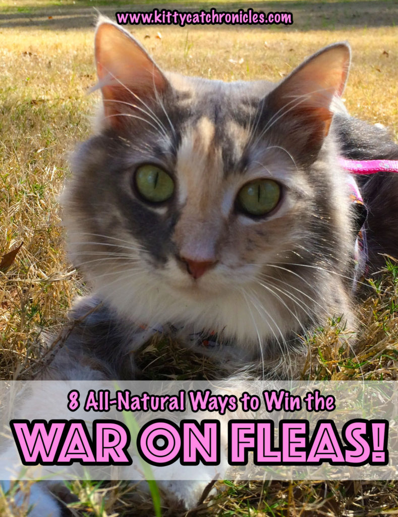 8 All-Natural Ways to Win the War on Fleas