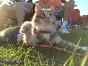 What is Cerebellar Hypoplasia? Sophie, CH Cat