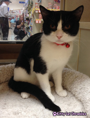 Blueberry/Tux - Circle of Friends Animal Society