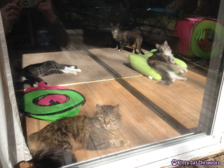 Sunbathing Cat Gang