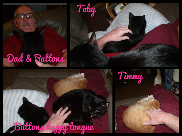 Timmy Tom Cat and Family
