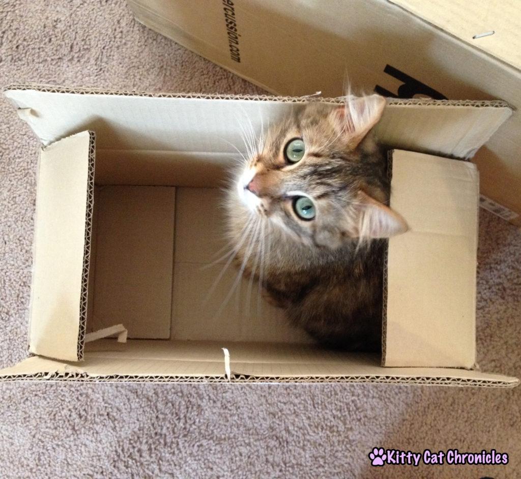 Caster Cat in a Box