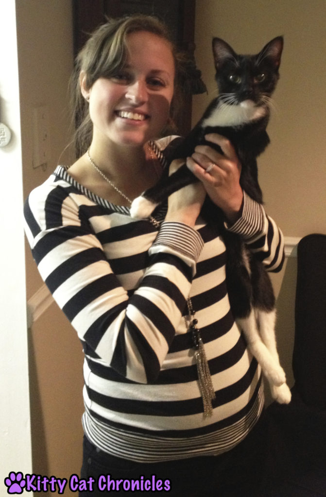 Stylish Cats - Adopt-a-Shelter-Cat