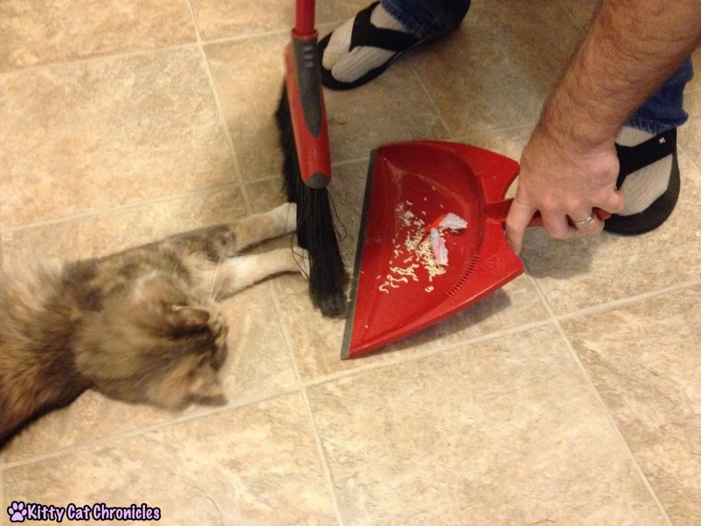 12 Reasons to Adopt a Shelter Cat - Cat Sweeps the Floor