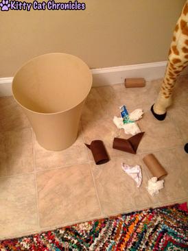 Bathroom Mystery