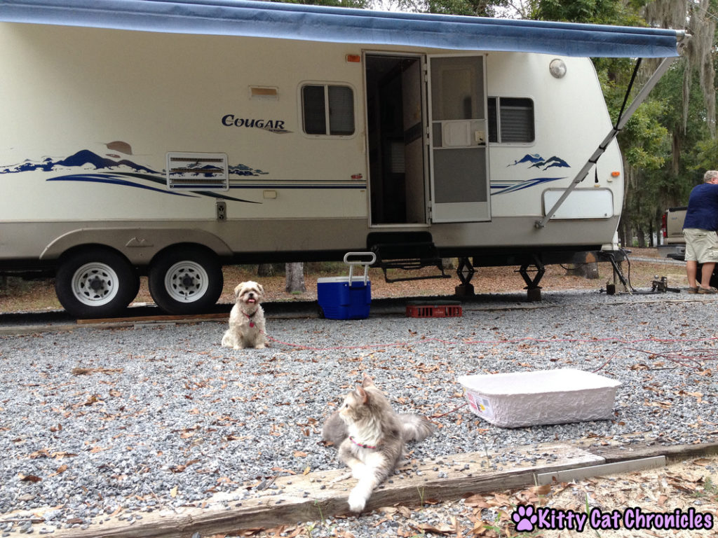 Camping with Sophie the Adventure Cat