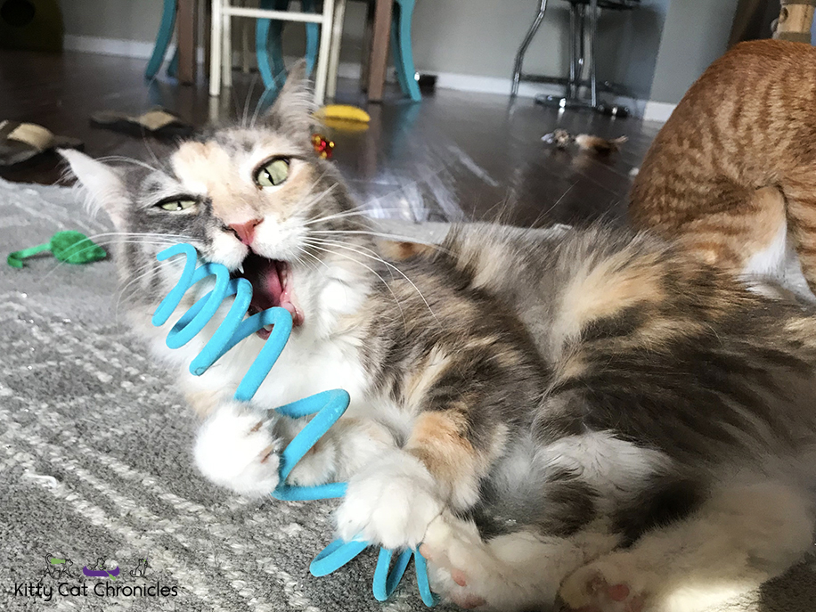 Lovey Lesson #2: The Chin Bite - cat playing with spring toy