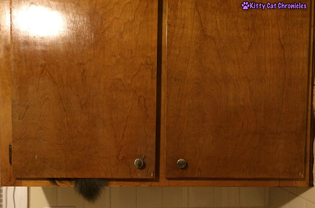Caster Cat in the Cabinet
