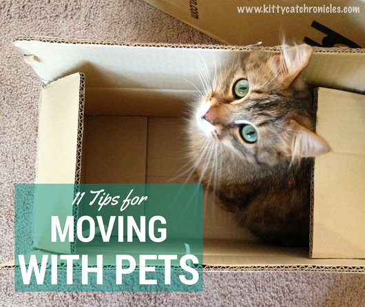 11 Tips for Moving with Pets