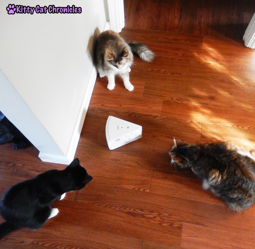 The Gang with PetSafe Cheese cat toy