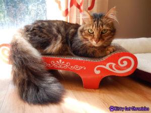 Caster, handsome model cat