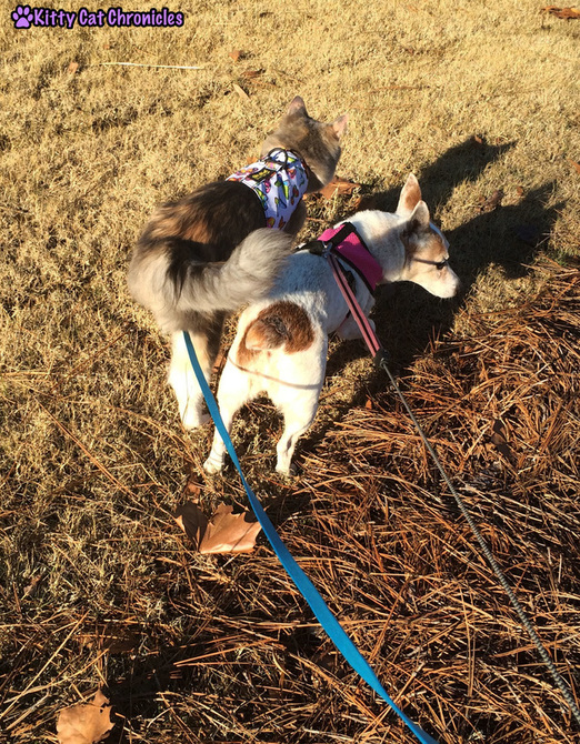 Wordless on #WobblyWednesday: A Day in the Park with Sophie & Lucy