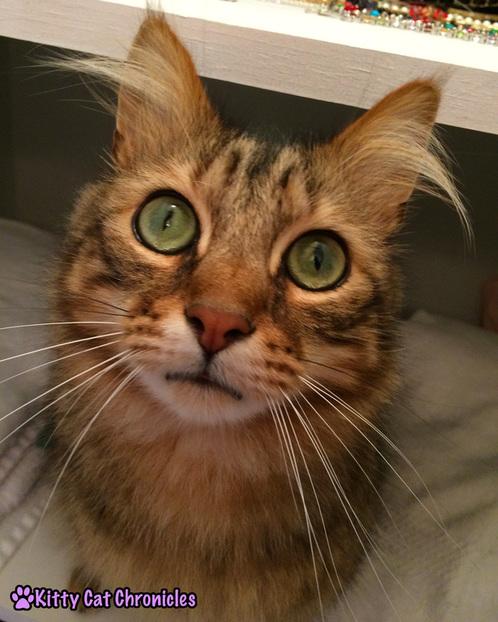 Caster, cute cat - Happy 3rd Birthday