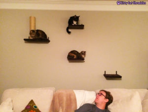 Cats on shelves
