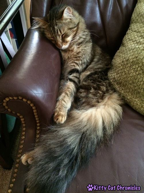 Caster, cat snuggling