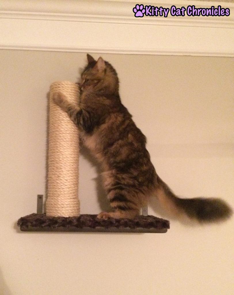 Caster cat on shelf - catification