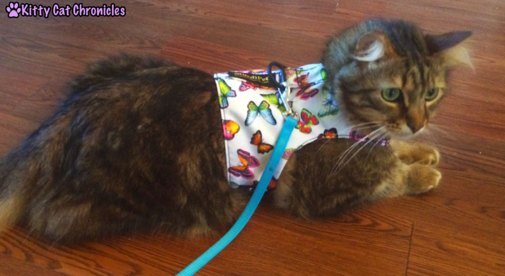 Caster, cat in butterfly harness