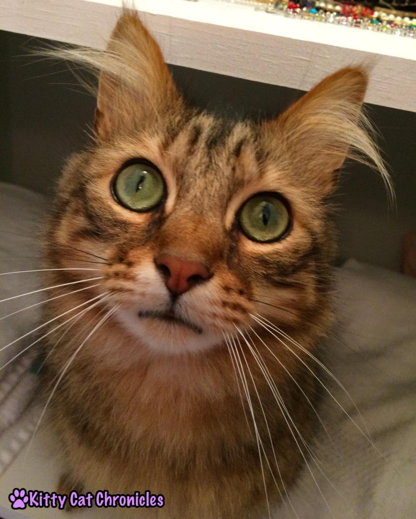 Caster cat