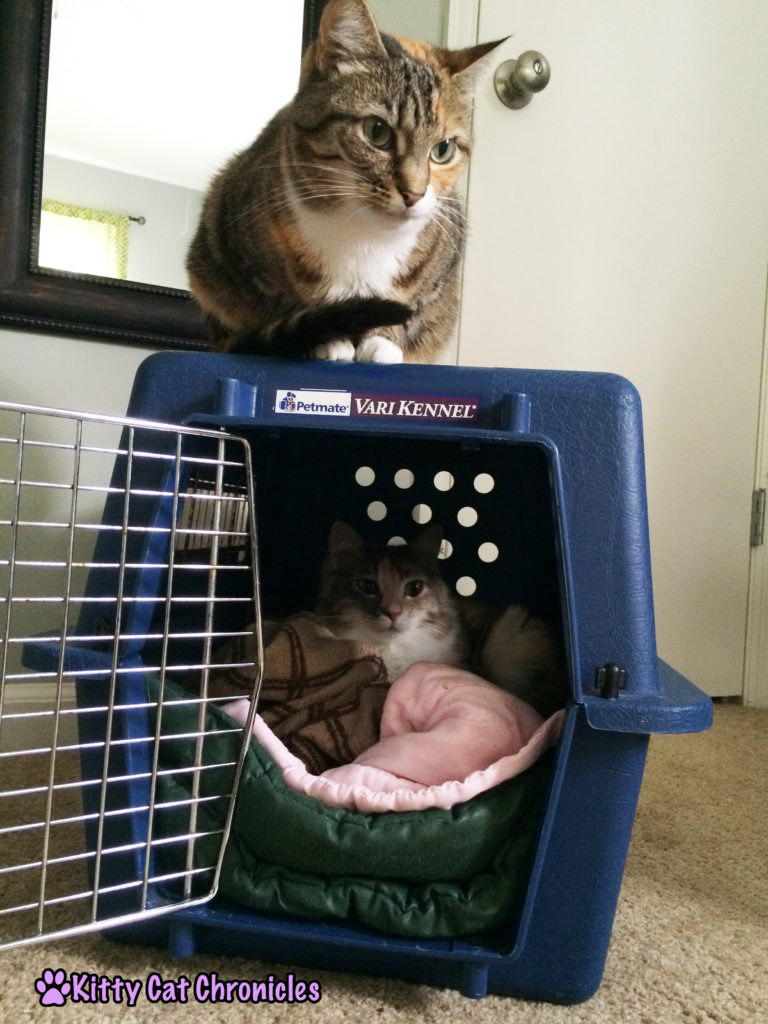 two cats in a dog crate