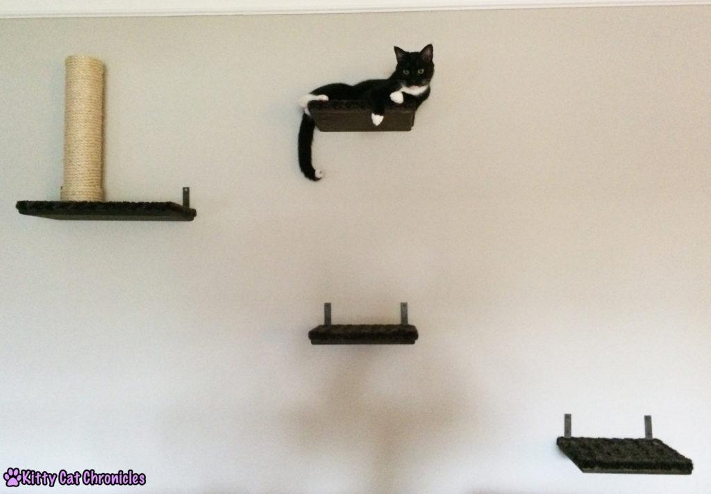 Sampson on Cat Shelves - Catification