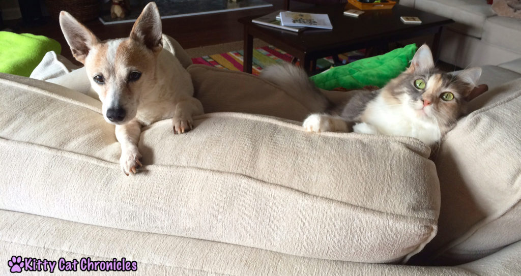 cat and dog on couch - Settling in with Lucy