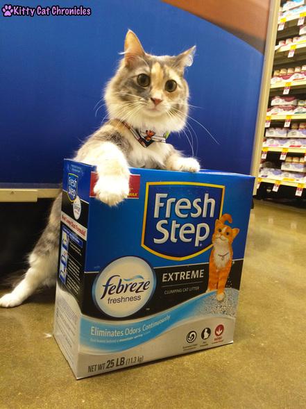 The KCC Cat Litter Check List | #FreshStepFebreze - Sophie in PetSmart with Fresh Step