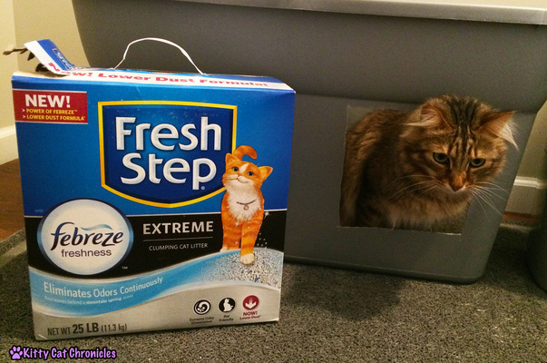 The KCC Cat Litter Check List | #FreshStepFebreze - Caster gives it his seal of approval!