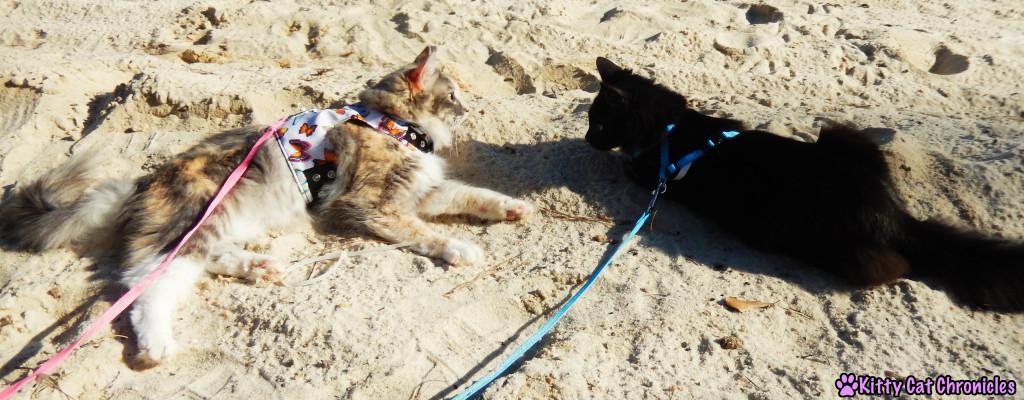 Sophie & Kylo Ren at Lake Tobosofkee - Cats on Beach