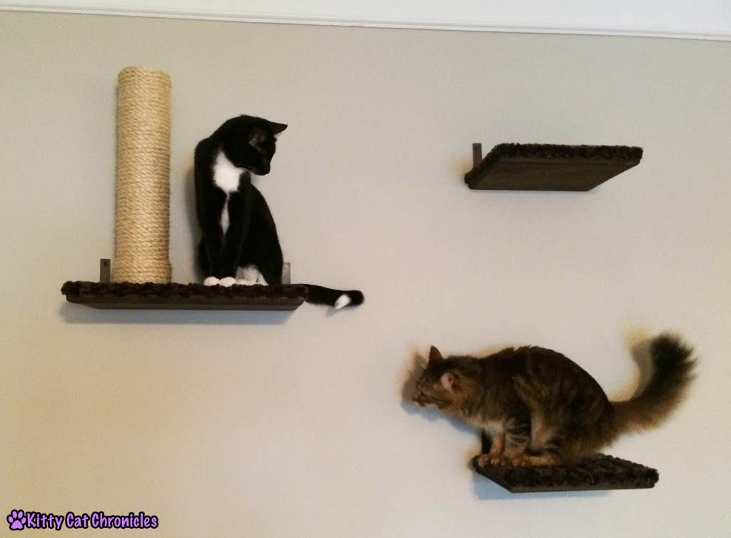 Caster & Sampson - two cats on shelf