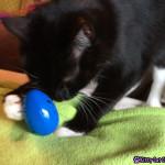 Sampson finds an egg!