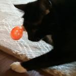 Sampson finds an egg