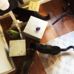 cats looking for Easter Eggs
