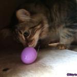 Caster finds an egg