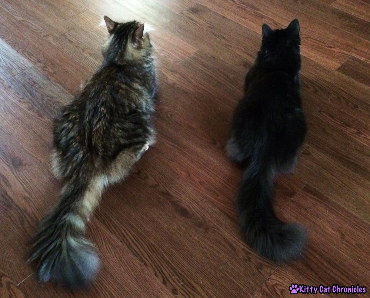 Kylo Ren & Caster - Copy Cats