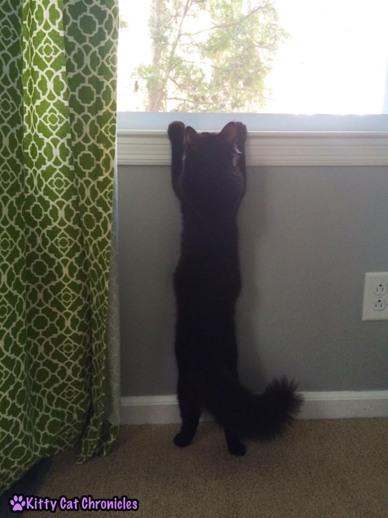Kylo Ren Climbing Window Sill