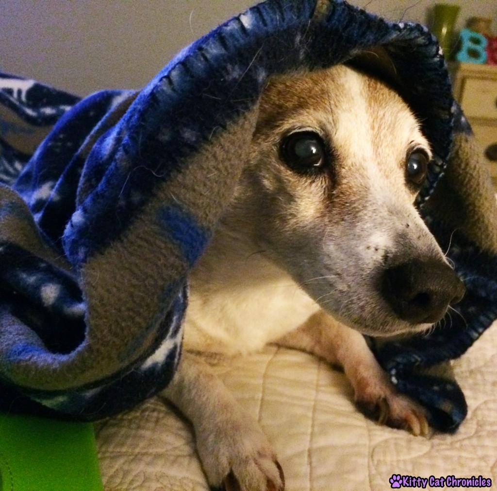 Lucy Under Blanket