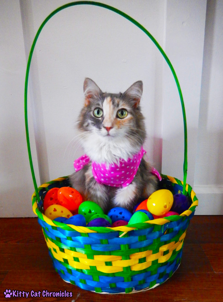 Happy Easter from the KCC Gang - cat in basket