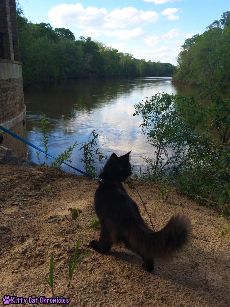 Kylo Ren, cat on leash - Amerson River Park