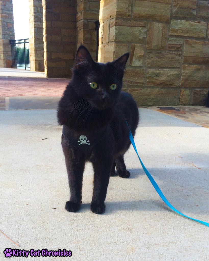 Kylo Ren, cat on leash