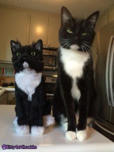 Sampson Cuddle Clone