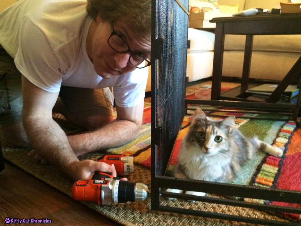 Sophie, cat helping build cage