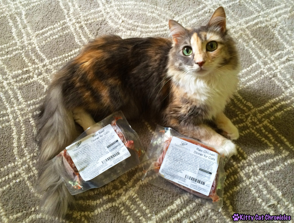 cat with Balanced Blends raw food