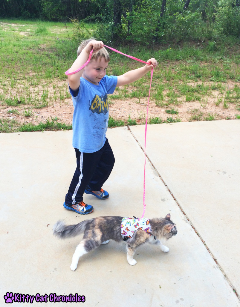 Sophie, cat on leash