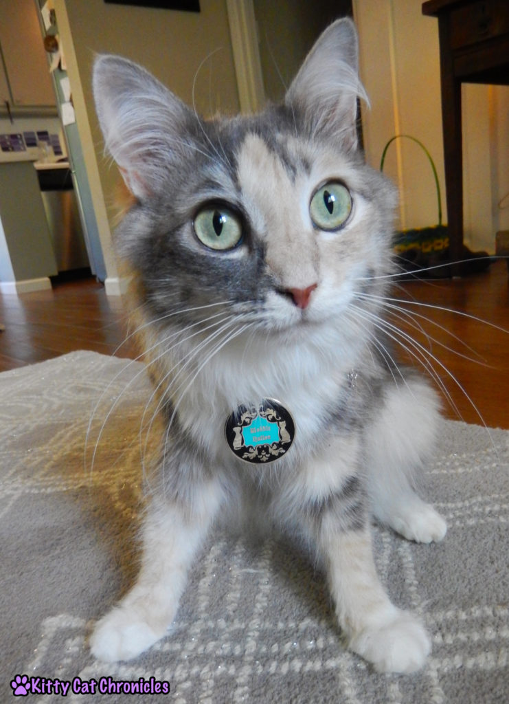 CH cat with Wobble Nation medallion