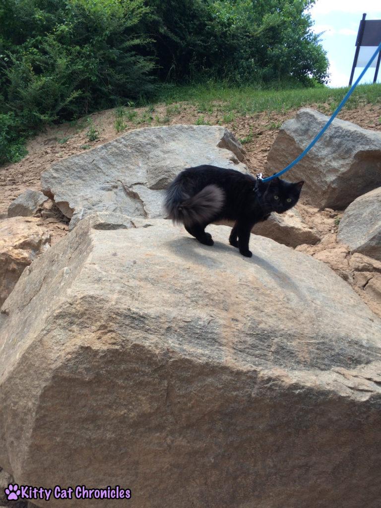 Kylo Ren, cat on rock