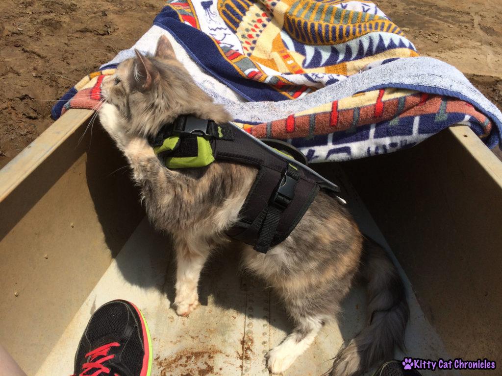 Sophie Cat Canoeing