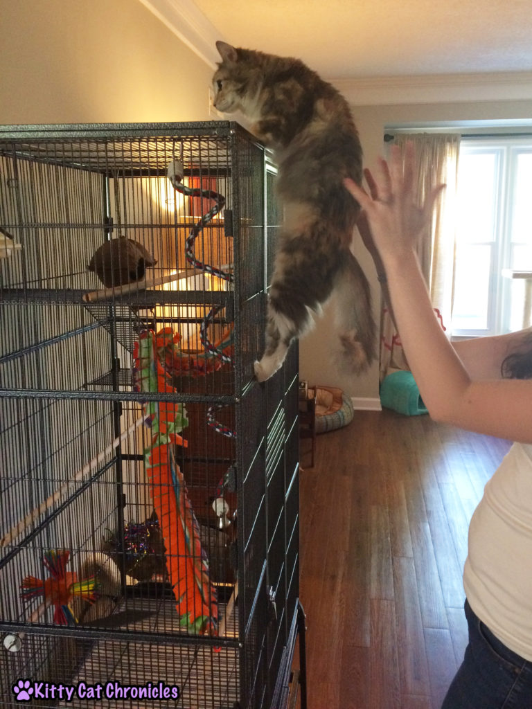 Sophie CH Cat Climbs Cage