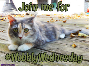 Wobbly Wednesday - Sophie, CH Cat